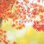 秋の紅葉ハイキング!服装や持ち物のワンポイントアドバイス!