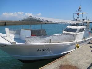 イルカウォッチング 漁船