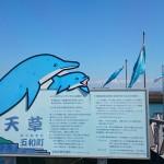 熊本・天草観光と言えばイルカウォッチング!激押しです!